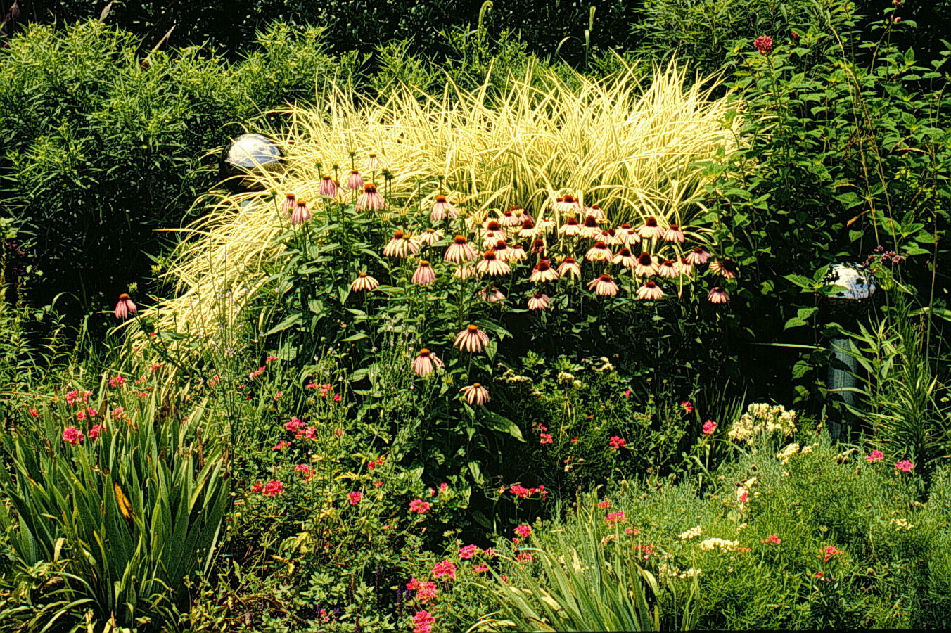 Tall Ornamental Grass Varieties An introduction to ornamental grasses and grasslikes for southern an introduction to ornamental grasses and grasslikes for southern gardeners workwithnaturefo